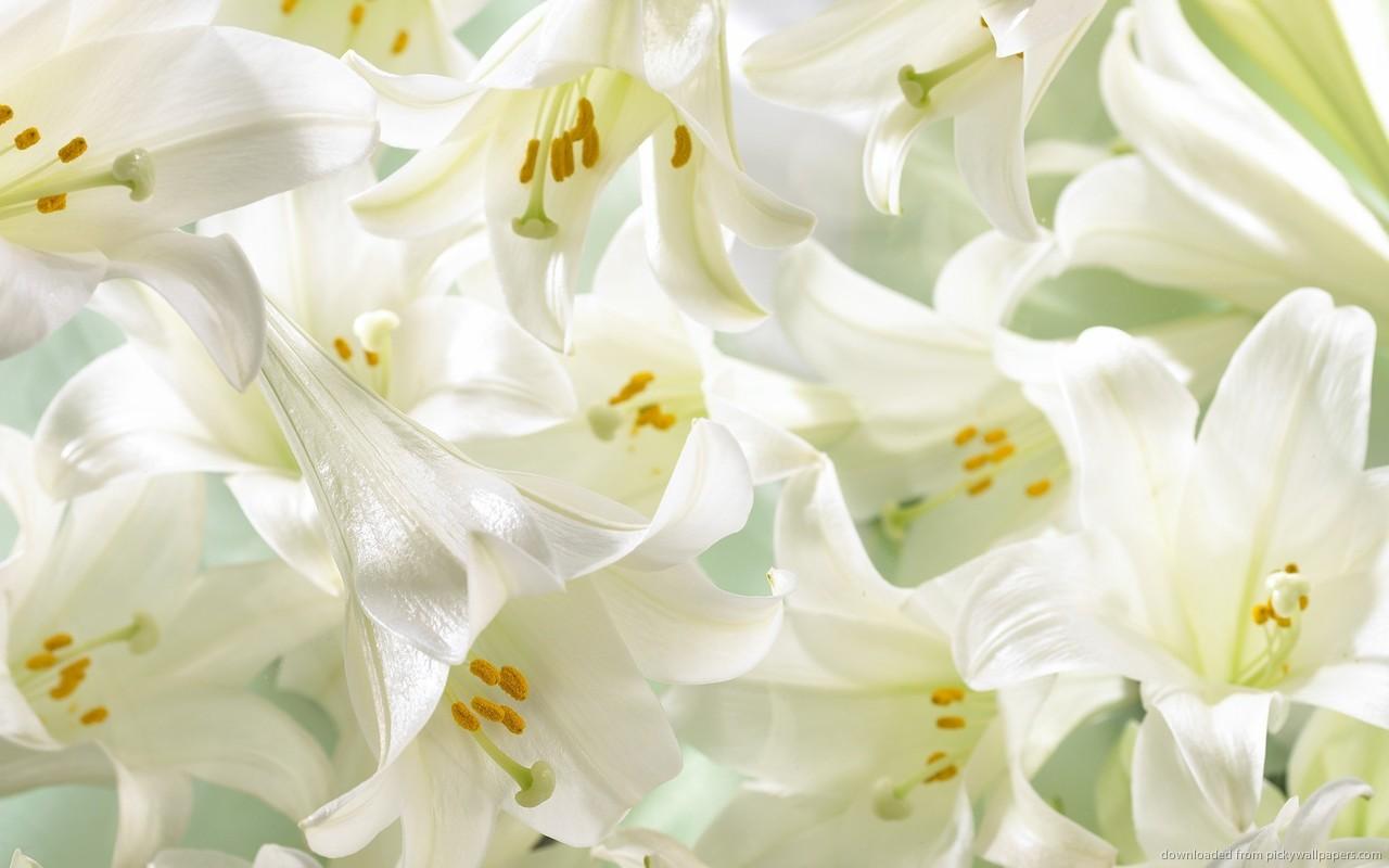 Serge lutens un lys about a flower purple paper planes white lilies izmirmasajfo