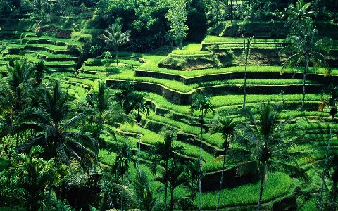 rice-terraces-bali_1680x1050_74061